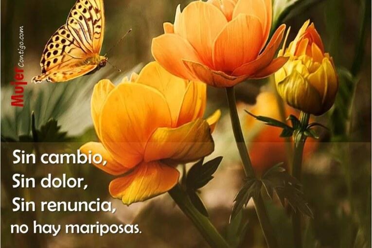 Sin cambio, Sin Dolor, Sin renuncia, No hay Mariposas.